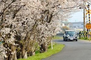 桜と愛車を記念撮影大型望遠レンズ プロカメラマン