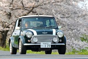 ロケにて車の走行シーンも撮影します。ミニクーパと桜